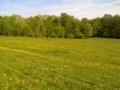 A teraszról a réti boglárkák ezreit pompáztató rét enyhén hajlik a patakig.